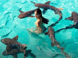 Baño tiburones Almería